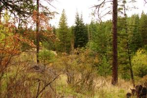 Acreage for Sale in Hayden Lake Idaho - Avondale on Hayden - Friar Drive