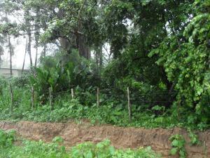 Terreno en Municipio Libertador Carabobo,Santa Isabel REF: 14-8645