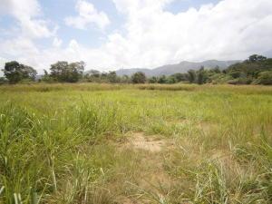Terreno en Municipio Bejuma Carabobo,Bejuma REF: 14-10055