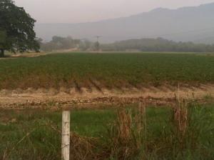 Terreno en Municipio Montalban Carabobo,La Segundera REF: 14-13042
