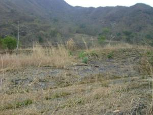 Terreno en Municipio Naguanagua Carabobo,MaA+/-ongo REF: 15-5123