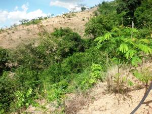 Terreno en Municipio Carlos Arvelo Carabobo,Central Tacarigua REF: 15-8257