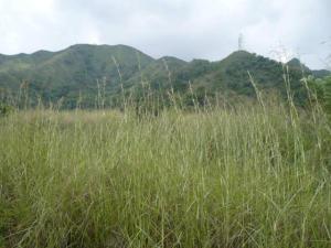 Terreno en Municipio Naguanagua Carabobo,MaA+/-ongo REF: 15-8564