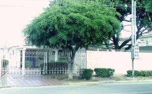 Casa en Municipio San Francisco Zulia,La Coromoto REF: 17-333