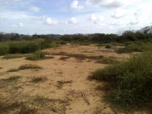 Terreno en Punto Fijo Falcon,Guanadito REF: 17-800
